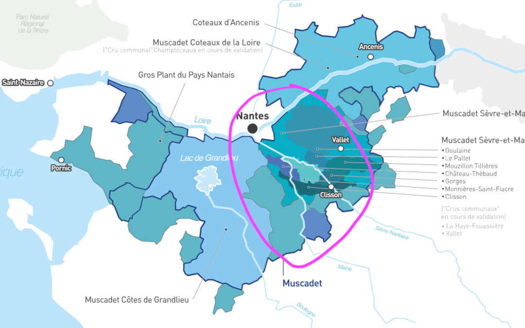 Muscadet – The Place, The Wine
